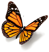 butterfly-200px